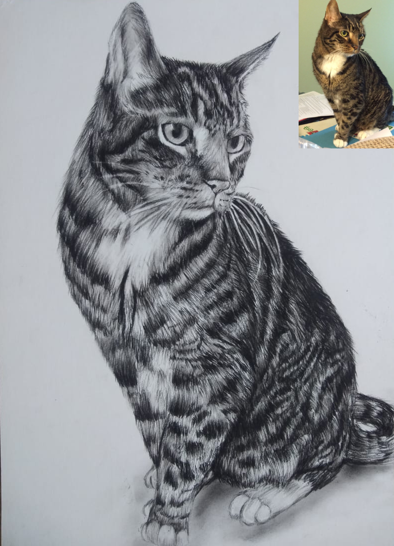 A Handmade Charcoal Pet Portrait (Women's Day Gifts)