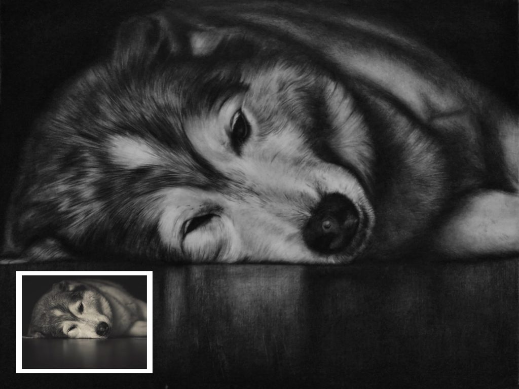Charcoal Pet Portrait (Wedding Gifts)