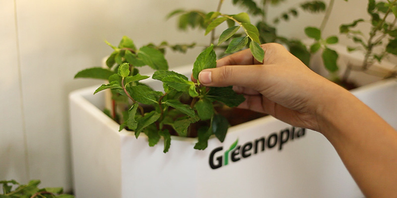 Greenopia Saplings (Women's Day Gifts)